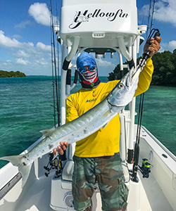 Barracudas are a very popular sport fish in the Florida Keys Backcountry