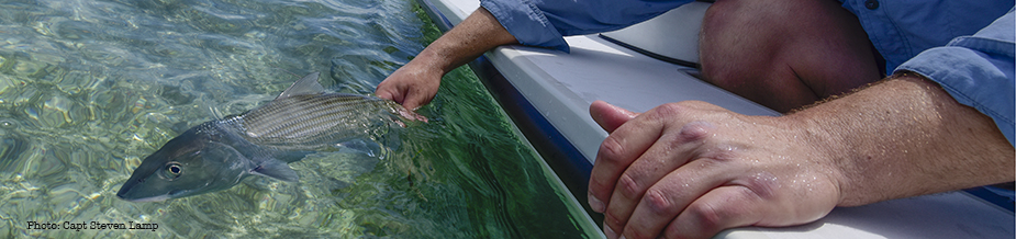 Angler releasing bonefish on boat side